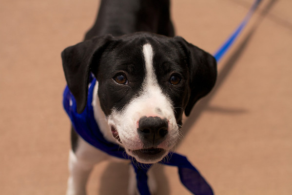 OutPaws May Adoption Event 10