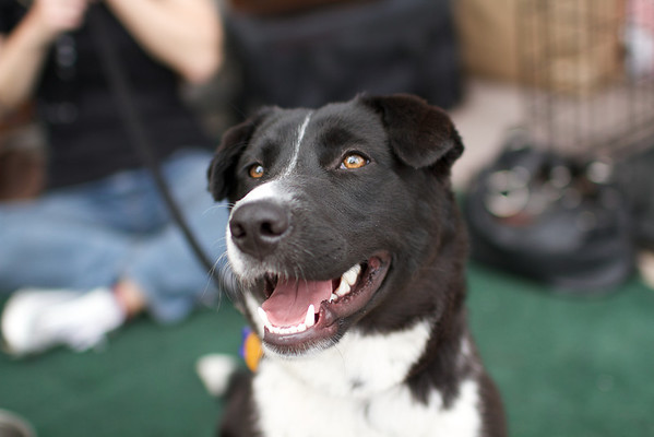 OutPaws May Adoption Event 149
