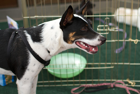 OutPaws May Adoption Event 171