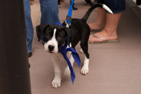 OutPaws May Adoption Event 21