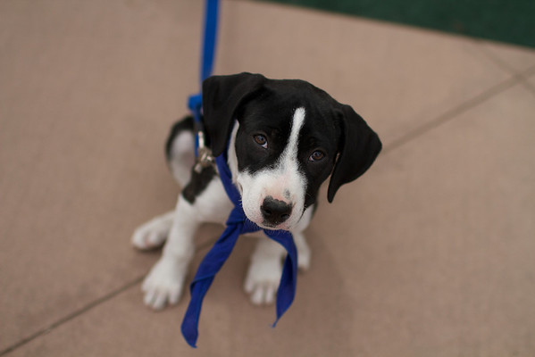 OutPaws May Adoption Event 156