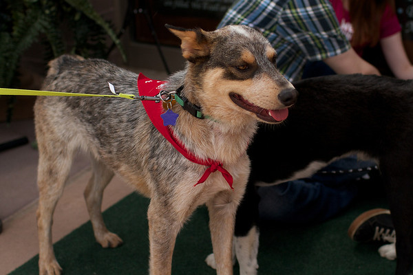 OutPaws May Adoption Event 102
