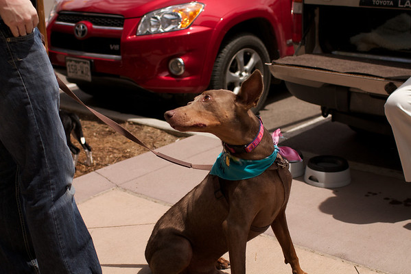 OutPaws May Adoption Event 3