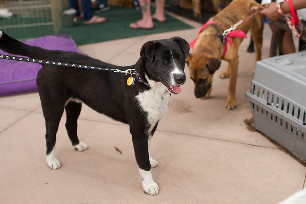 OutPaws May Adoption Event 190
