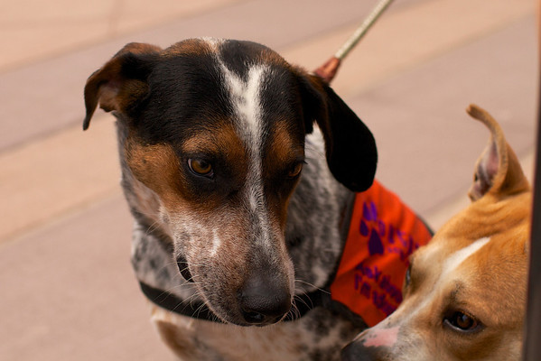 OutPaws May Adoption Event 14