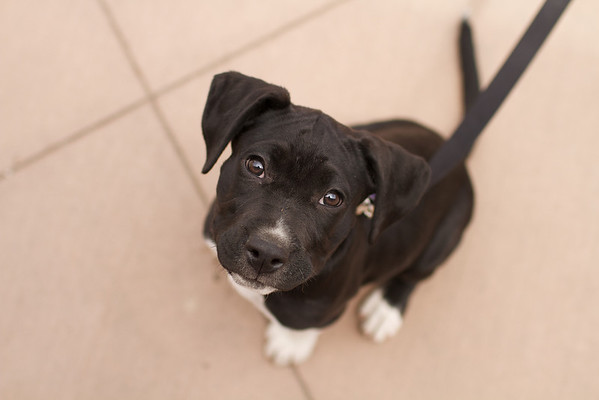OutPaws May Adoption Event 128