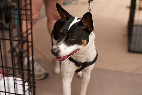 OutPaws May Adoption Event 72