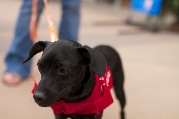 OutPaws May Adoption Event 68