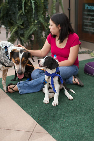 OutPaws May Adoption Event 142