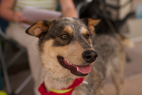 OutPaws May Adoption Event 83