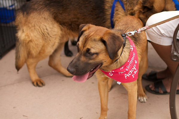 OutPaws May Adoption Event 174