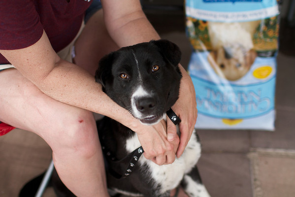 OutPaws May Adoption Event 164