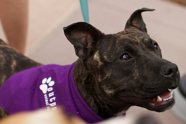 OutPaws May Adoption Event 62