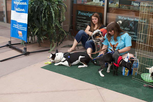 OutPaws May Adoption Event 176