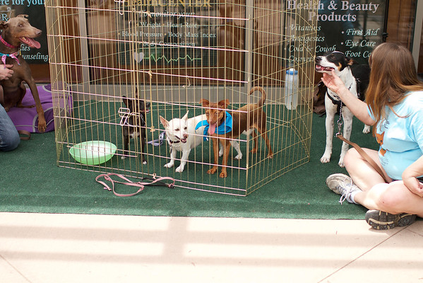 OutPaws May Adoption Event 80