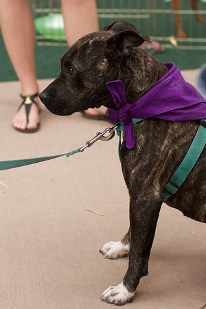 OutPaws May Adoption Event 64
