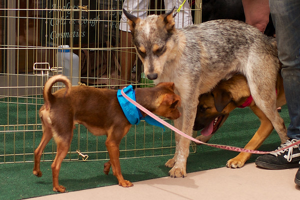 OutPaws May Adoption Event 22