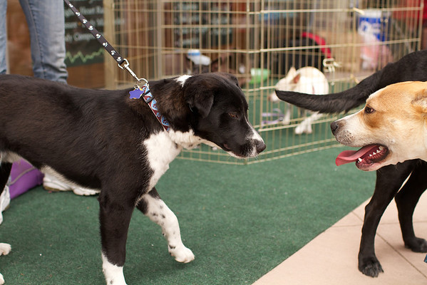 OutPaws May Adoption Event 29