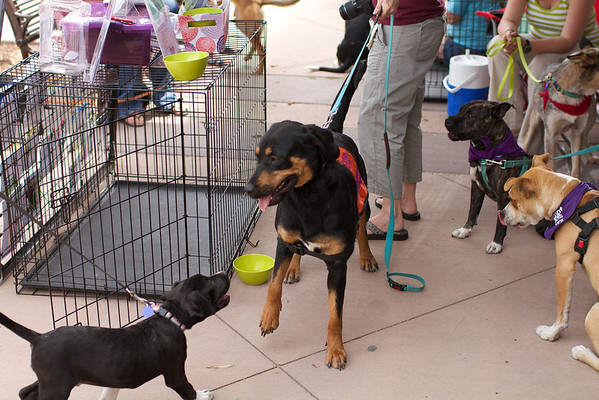 OutPaws May Adoption Event 119