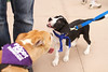 OutPaws May Adoption Event 50