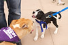 OutPaws May Adoption Event 49