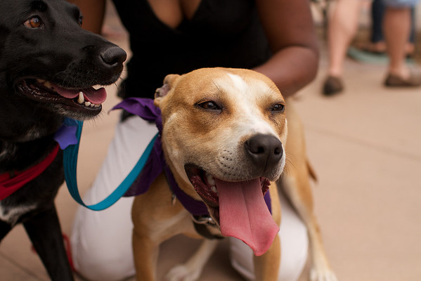 OutPaws May Adoption Event 32