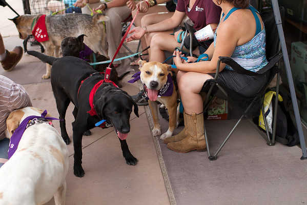 OutPaws May Adoption Event 115