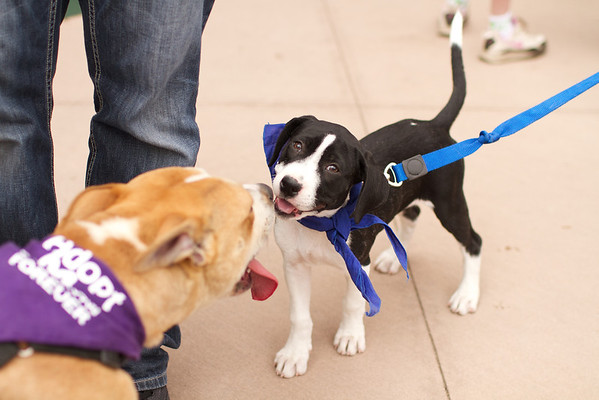 OutPaws May Adoption Event 51