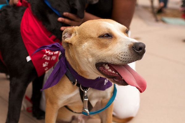 OutPaws May Adoption Event 34
