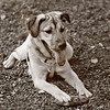 Charlotte, our third adopted dog. Our first doggies, Bootsie and Klondike are now both in doggie heaven.