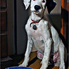 Lili at 4 months