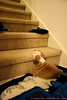 He plopped his head on the bottom-most stair and fell asleep!