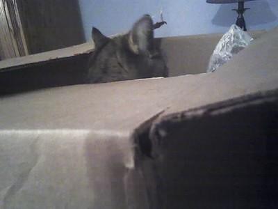 TIGGER IN BOX 10/13/2006