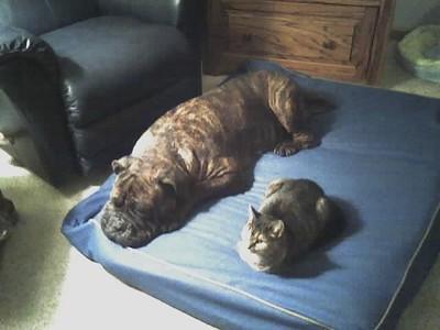 ABBY & TIGGER 10/12/2006