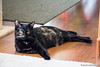Sissy<br /> This is one of our kitties relaxing in the foyer next to the living room.