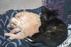 PG n Sissy : Our kittens - Pretty Girl (PG) and Sissy