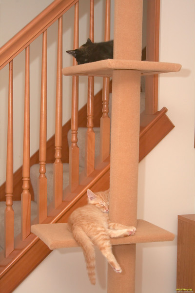 Crashed kittens on the cat shelves.