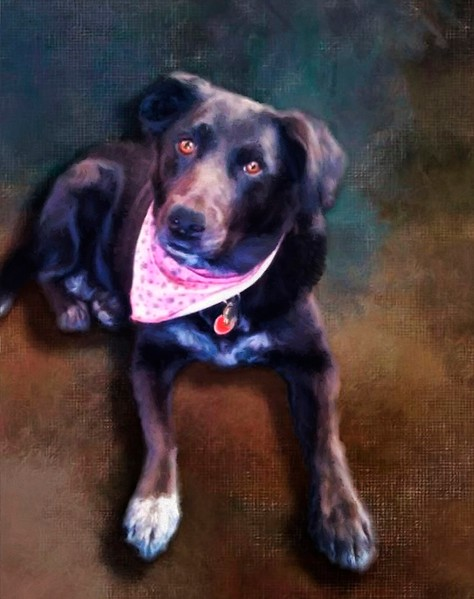 Norah, Labrador Retriever painted and printed on metal.