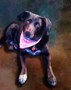 Norah, Labrador Retriever painted and printed on metal.