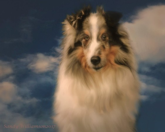 Cloud, owned and photographed by Janet Moyer.  This is a memorial photograph I did of him.