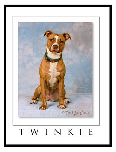 P107_3882 twinkie framed_PNE