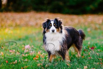 008Pelkey-Dogs-20171022_5091