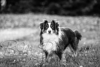 007Pelkey-Dogs-20171022_5089