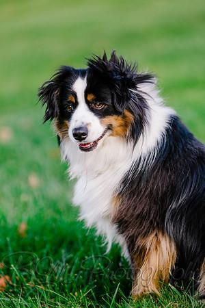 039Pelkey-Dogs-20171022_5117