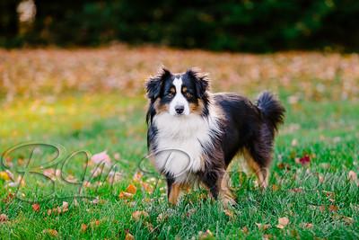 004Pelkey-Dogs-20171022_5085