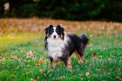 002Pelkey-Dogs-20171022_5087
