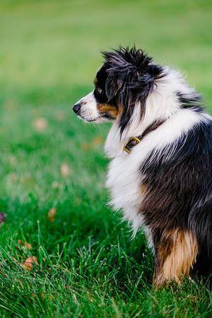 040Pelkey-Dogs-20171022_5119