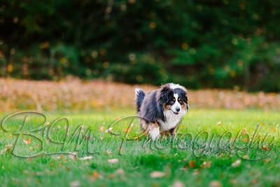 034Pelkey-Dogs-20171022_5098