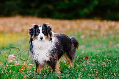 009Pelkey-Dogs-20171022_5092