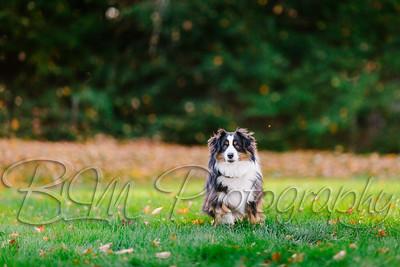 013Pelkey-Dogs-20171022_5103